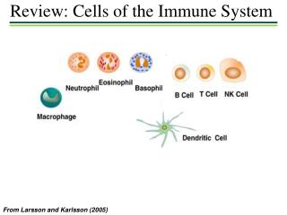 Review: Cells of the Immune System