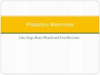 Predatory Mammals