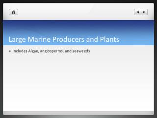 Large Marine Producers and Plants