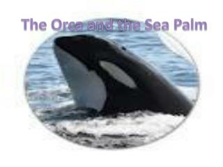 The Orca and the Sea Palm