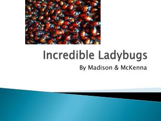 Incredible Ladybugs