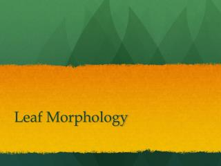 Leaf Morphology