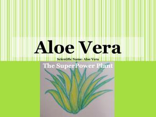Aloe  Vera Scientific Name: Aloe Vera