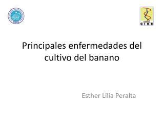 Principales enfermedades  del  cultivo  del  banano