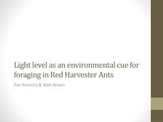Light level as an environmental cue for foraging in Red Harvester Ants