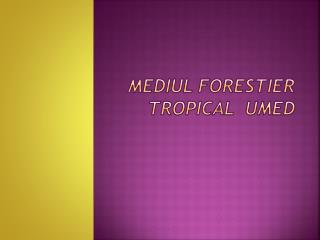 Mediul forestier  tropical   umed