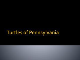 Turtles of Pennsylvania