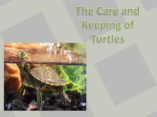 The Care and Keeping of   Turtles