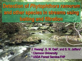 Results of detection  identification of Phytophthora from NC streams