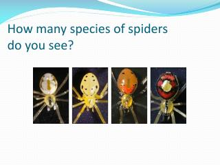 How many species of spiders  do you see?