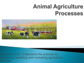 Animal Agriculture Processes