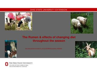 The Rumen & effects of changing diet throughout the season