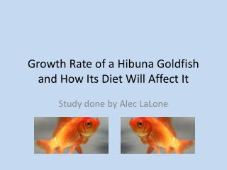 Growth Rate of a  Hibuna  Goldfish and How Its Diet Will Affect It