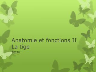 Anatomie et fonctions II La tige