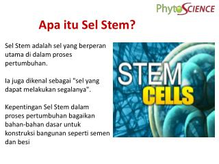 Apa itu Sel  Stem?