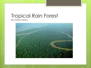 Tropical Rain Forest By: Patrick  Mawn