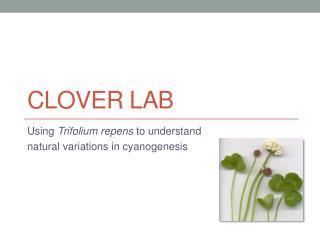 Clover Lab