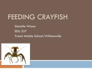 Feeding Crayfish
