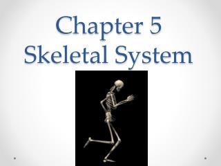 Chapter 5 Skeletal System
