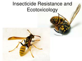 Insecticide Resistance and Ecotoxicology