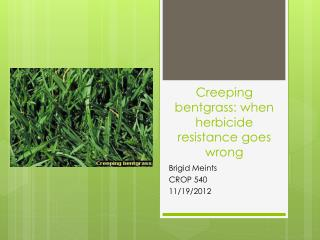 Creeping  b entgrass: when herbicide resistance goes wrong