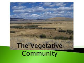 The Vegetative Community