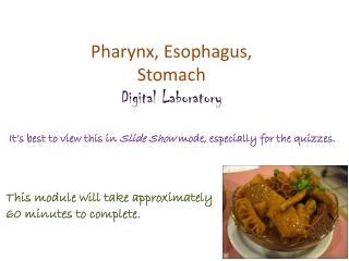 Pharynx, Esophagus, Stomach Digital Laboratory