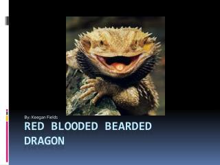 Red blooded bearded dragon
