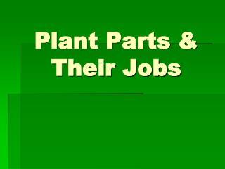 Plant Parts & Their Jobs