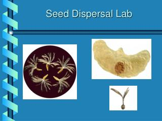 Seed Dispersal Lab