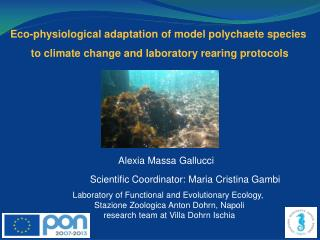 Eco-physiological adaptation  of model  polychaete  species