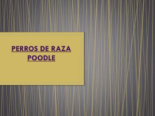 PERROS DE RAZA POODLE