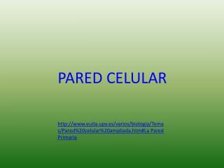 PARED CELULAR