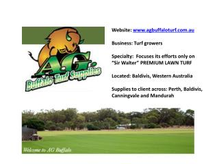 Sir Walter Lawn Turf in Perth,Baldivis,Canningvale,Mandurah