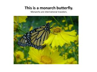 This is a monarch butterfly.  Monarchs  are international travelers.