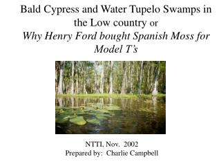 Bald Cypress and Water Tupelo Swamps in the Low country or Why ...