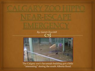 CALGARY ZOO HIPPO NEAR-ESCAPE EMERGENCY