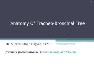 Anatomy Of  Tracheo -Bronchial Tree