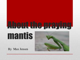 About  the  praying  mantis