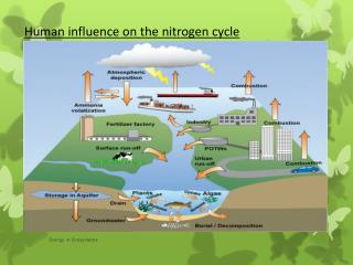 Human influence on the nitrogen cycle