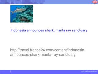 Indonesia announces shark, manta ray sanctuary