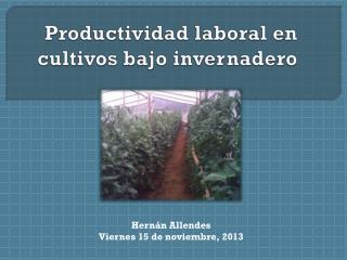 Productividad laboral en cultivos bajo invernadero