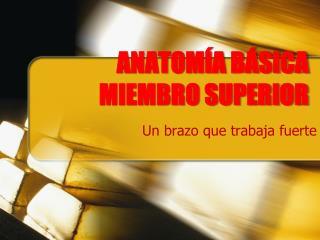 ANATOMÍA BÁSICA MIEMBRO SUPERIOR