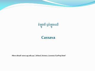 ដំឡូងមី ឬដំឡូងឈើ Cassava