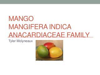 Mango Mangifera indica Anacardiaceae  Family