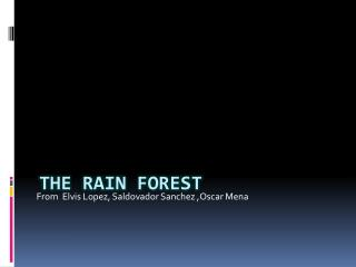 The rain forest