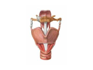 EMG OF INTRINSIC LARYNGEAL MUSCLES