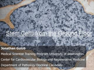 Stem Cells from the Ground Floor