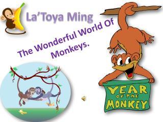 The Wonderful World Of Monkeys.