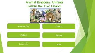 Animal Kingdom: Animals within the Five Classes